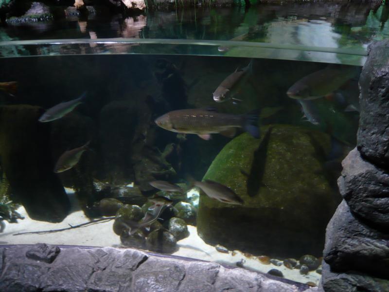 Sealife München